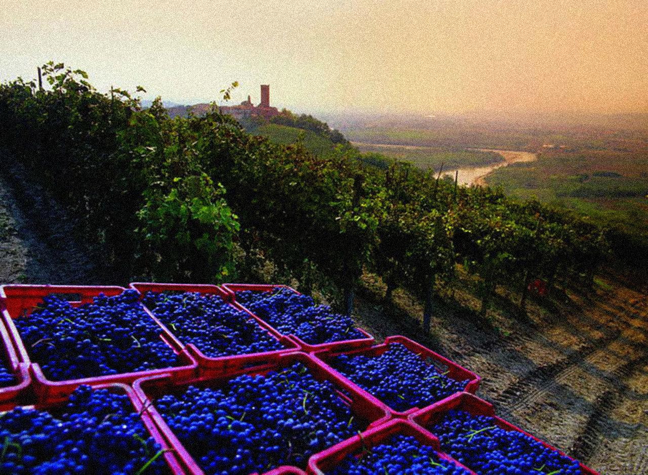As vinícolas de Lavaux e as surpresas do mundo do vinho