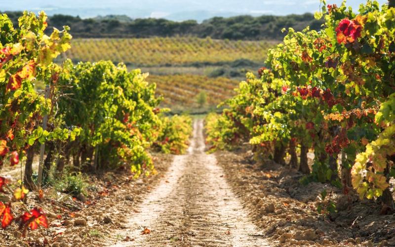 Na Espanha, decifrando os Vinos de Pago