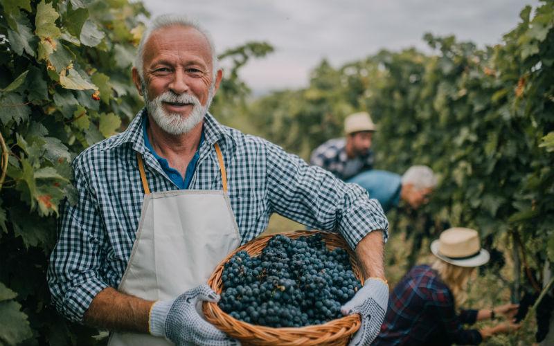 INFOGRÁFICO: a produção do vinho