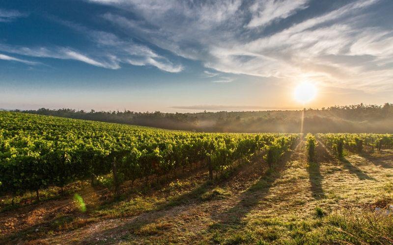 5 coisas que você deve saber sobre os vinhos portugueses!