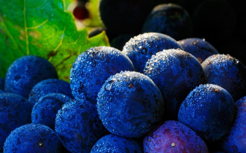 Conheça melhor a Pinot Noir, a uva preferida da Borgonha