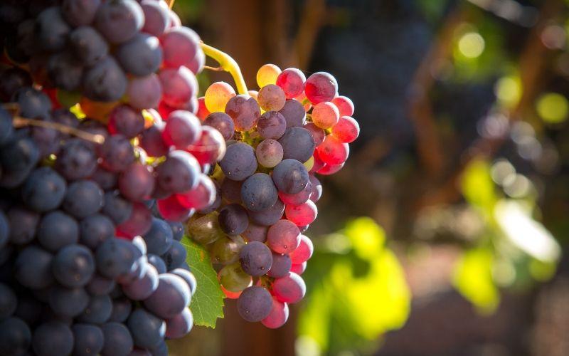 De norte a sul: os vinhos no Brasil