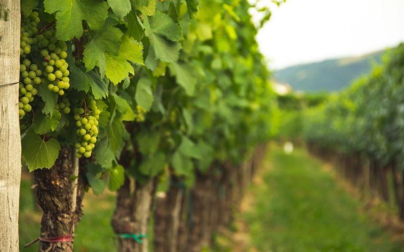 Fique de olho: novidades no mundo dos vinhos do Brasil