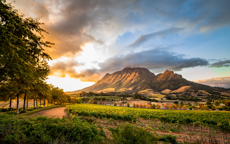 INFOGRÁFICO: curiosidades sobre o vinho na África do Sul