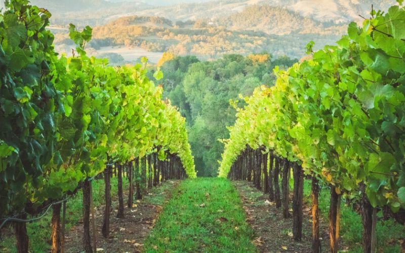 Viajar pelos vinhos