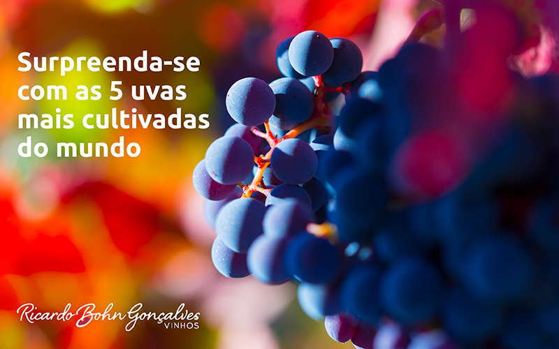 As 5 uvas favoritas do planeta