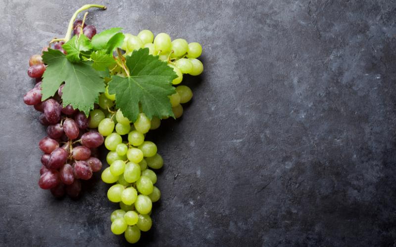 7 infográficos sobre as uvas mais conhecidas do mundo