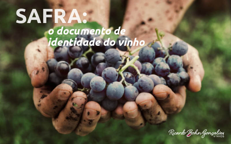 Safra: o documento de identidade do vinho