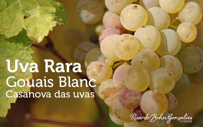 Uva rara: Gouais Blanc, Casanova das uvas